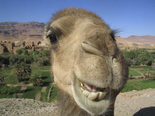 kameel-1-of-1.jpg